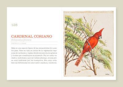 Libro Avifauna venezolana